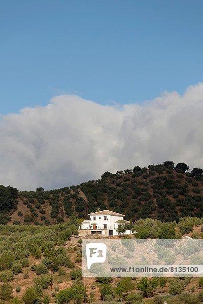 Europa Berg Wohnhaus Baum Landschaft Olive Andalusien Spanien