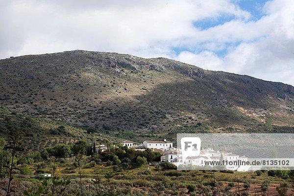 Europa Berg Landschaft weiß Dorf Olive Andalusien Spanien