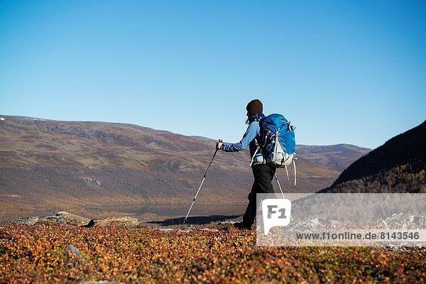 Berg  folgen  Landschaft  wandern  Herbst  vorwärts  Kungsleden  Schweden