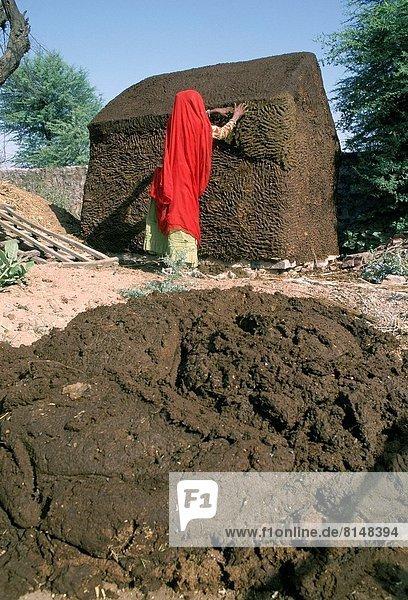 Hausrind  Hausrinder  Kuh  gebraucht  kochen  Frau  Frische  Produktion  trocken  Laden  Kuh  Indien