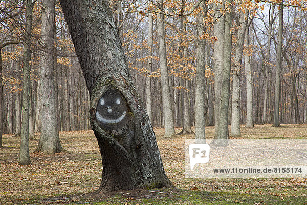 A tree with a smiley face