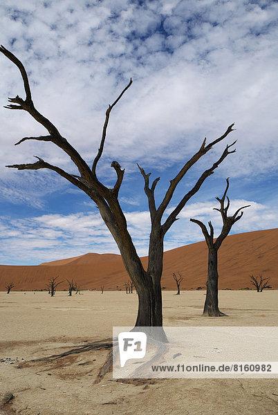 kahler Baum kahl kahle Bäume
