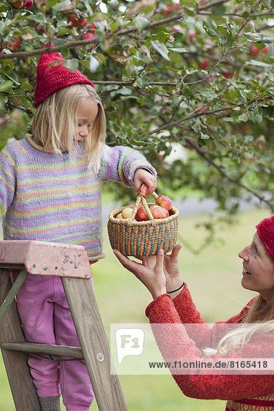 hoch  oben  Apfel  Tochter  aufheben  Mutter - Mensch