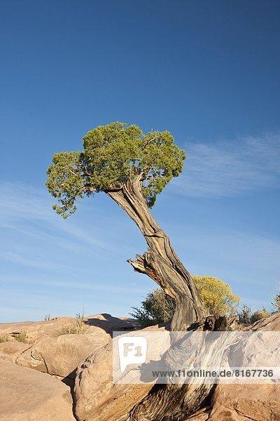 Small tree on stone