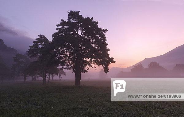 Morgennebel im Inntal