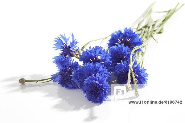 Blaue Kornblumen auf weißem Grund  Nahaufnahme