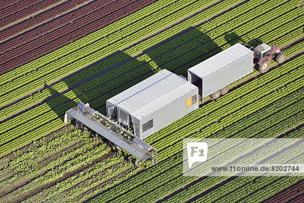 Salaternte und Verarbeitung  Luftbild