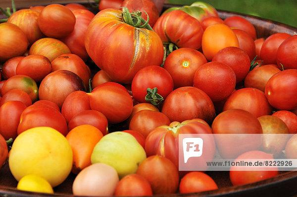 Verschiedene Tomatensorten (Solanum lycopersicum) auf einem Tablett