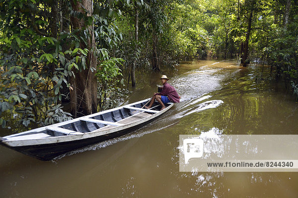 Indian man travelling by boat through the Várzea Forests  floodplain forest