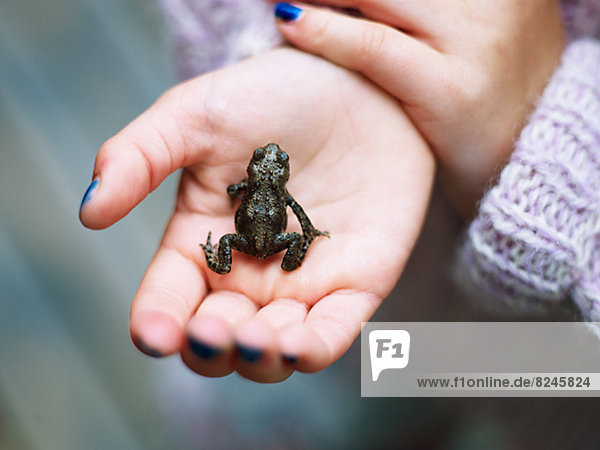 Small frog on girls hand