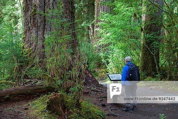 Tropisch,  Tropen,  subtropisch , einsteigen , Wald , Tourist , Regen , Information , vorlesen