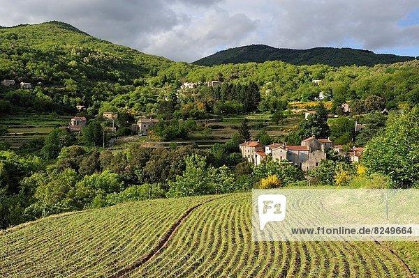 niedlich  süß  lieb  Frankreich  Europa  anbauen  Zwiebel  Terrasse