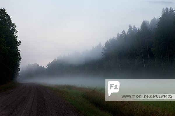 Foggy landscape with road