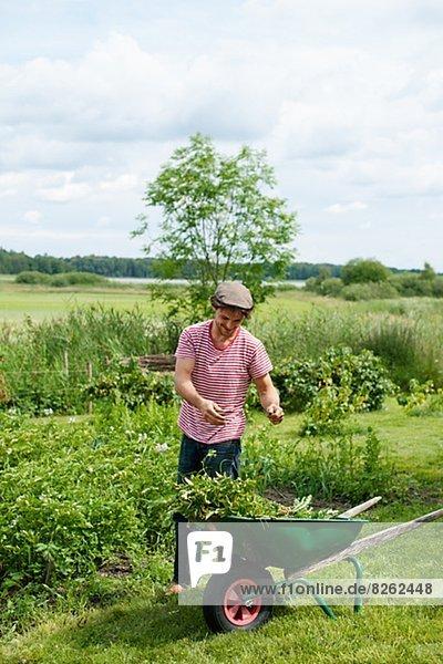 Mann  ernten  Garten