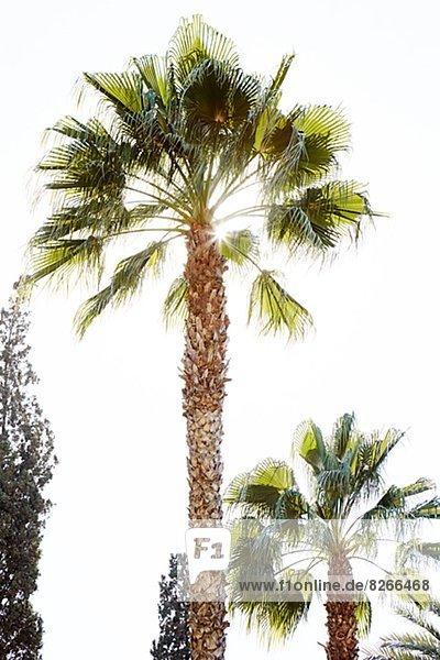 niedrig Baum Ansicht Flachwinkelansicht Winkel