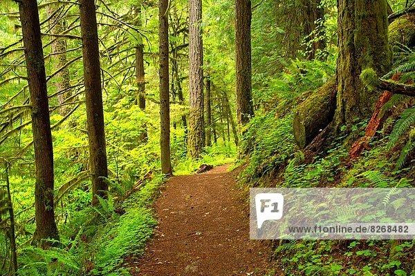 Wolf Creek Falls Trail  Roseburg District Bureau of Land Management  Oregon.