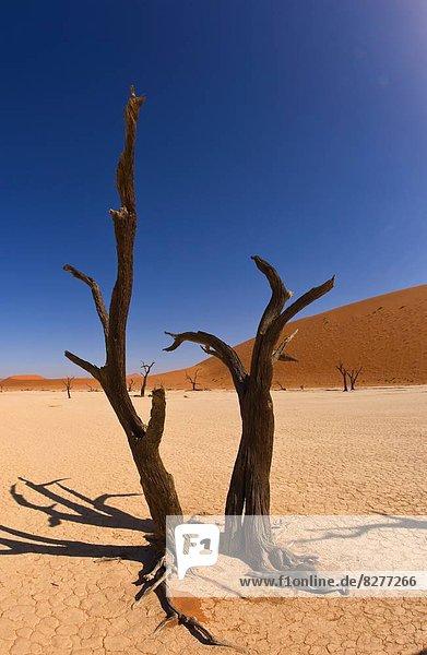 Namibia Namib kahler Baum kahl kahle Bäume Afrika
