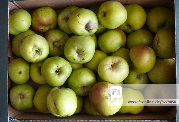 kochen  Apfel