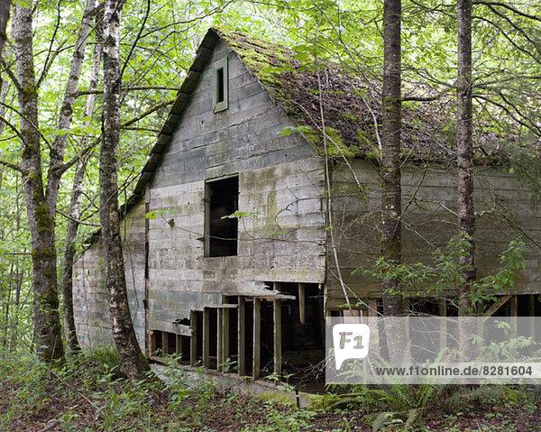 Ruinen eines Holzhauses in British Columbia  Kanada Ruinen eines Holzhauses in British Columbia, Kanada