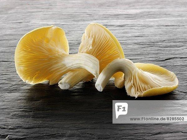 Frische  gelb  Auster  roh
