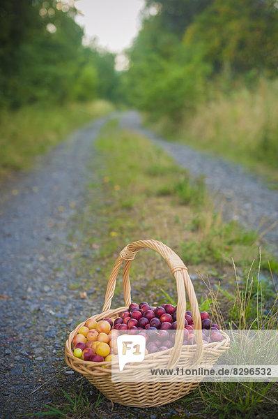 Mirabelles in a basket