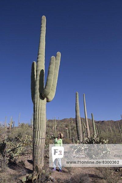 Vereinigte Staaten von Amerika  USA  Nordamerika  Arizona