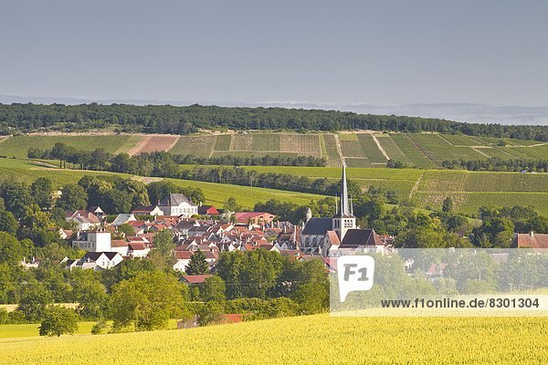 Frankreich  Europa  Dorf  Zimmer  Champagner