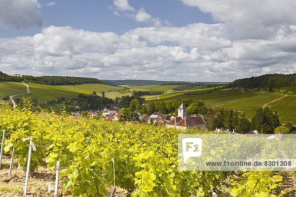 Feuerwehr  Frankreich  Europa  über  Dorf  Weinberg  Zimmer  Aube  Champagner