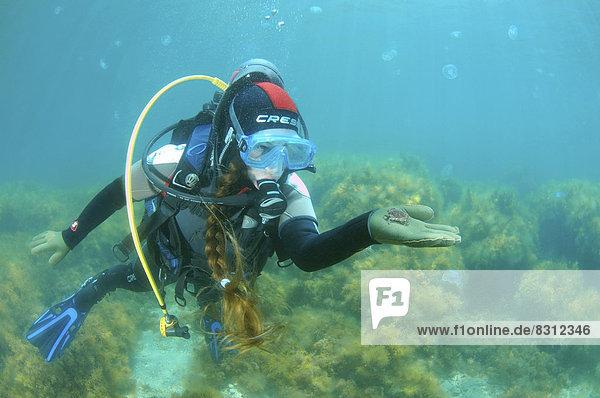 Taucherin hält eine Krabbe
