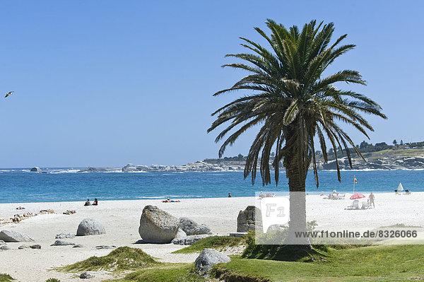 Felsen und eine Palme am Camps Bay Beach