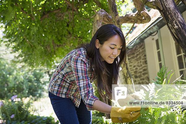 Ein Bauernhof  der biologisches Gemüse und Obst anbaut und verkauft. Eine junge Frau arbeitet.