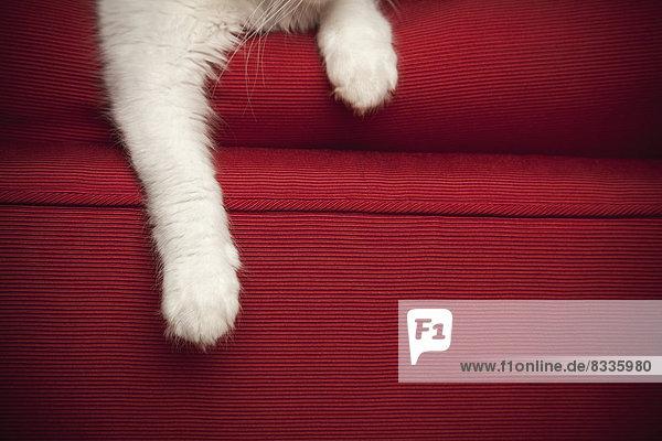Ein Kätzchen auf einem roten Sofa. Ansicht der Vorderbeine und der Pfote. Ein Kätzchen auf einem roten Sofa. Ansicht der Vorderbeine und der Pfote.