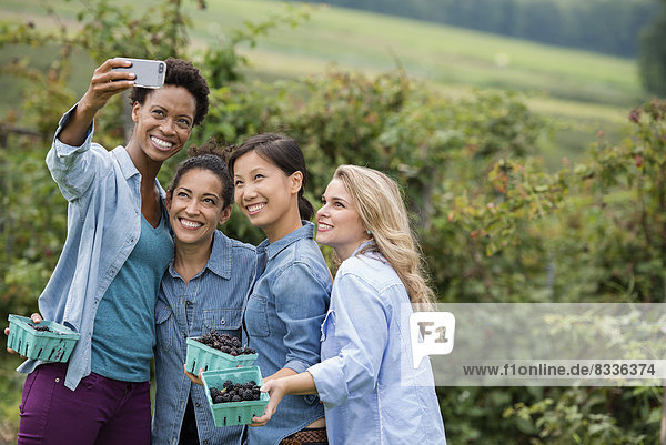 Picking blackberry fruits on an organic farm. Four women posing for a selfy photograph  taken using a smart phone.
