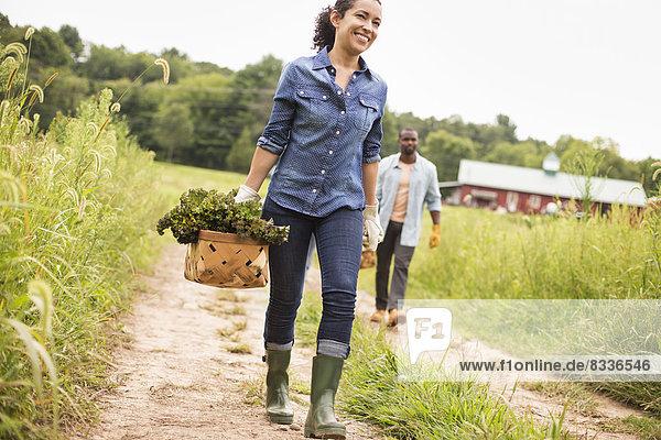 Zwei Personen arbeiten auf einem Biobetrieb. Sie tragen Körbe mit frisch gepflücktem Gemüse.