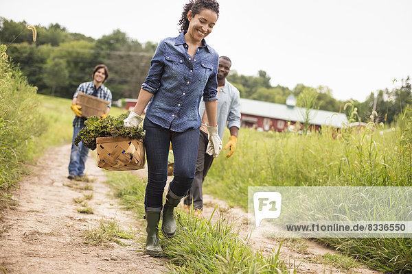 Drei Personen arbeiten auf einem Biobetrieb. Sie gehen einen Weg entlang  der mit Körben voller Gemüse gefüllt ist.