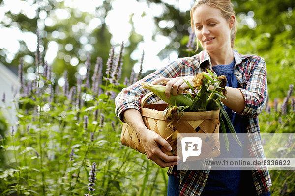Eine Frau trägt einen vollen Korb mit frisch geerntetem Maiskolben und Gemüse aus dem Garten.