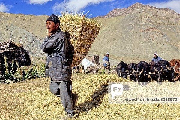 Indien  Ladakh