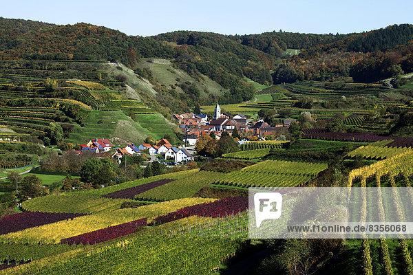 Wein Landschaft Dorf Herbst Kultur Baden-Württemberg Deutschland