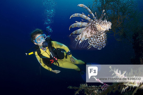 Scuba diver watching a Red Lionfish (Pterois volitans)  Palawan  Mimaropa  Philippines
