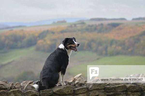 sitzend ,Berg ,Landschaft ,Stein ,Wand ,Hund ,Deutschland