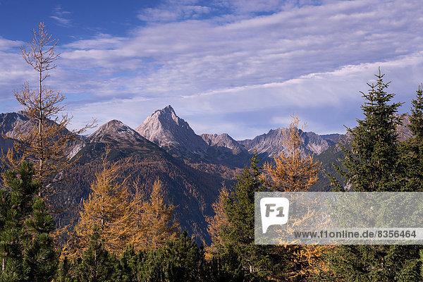 Herbstwald  Lermooser Berge  Ehrwald  Tirol  Österreich