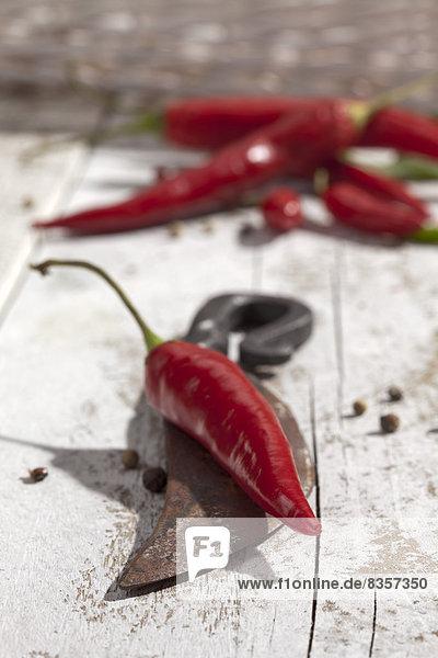 Rote Chilischoten (Capsicum) und ein altes Messer auf weißem Holztisch  Studioaufnahme