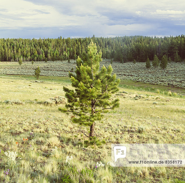 USA  Colorado  Nature and landscape near Salida