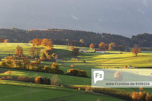 Germany  Bavaria  Upper Bavaria  Pfaffenwinkel  Riegsee