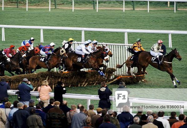 Wettrennen  Rennen  Großbritannien  gehen  über  Jagd  Festival  Jockey  Cheltenham Spa  Pferderennbahn
