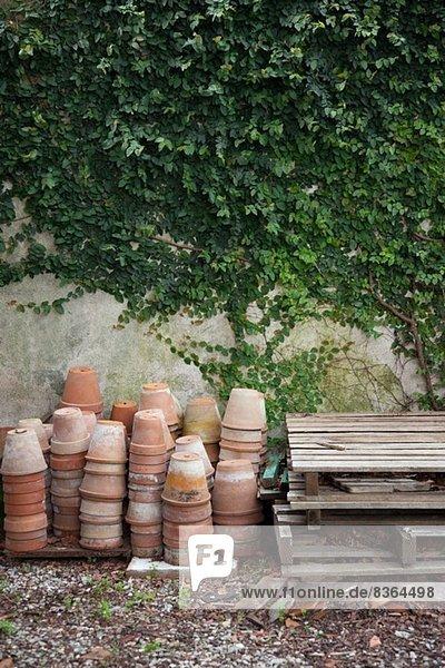 Terrakotta-Pflanzentöpfe an der Wand mit Efeu