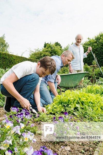 Großvater  Vater und Sohn Gartenarbeit