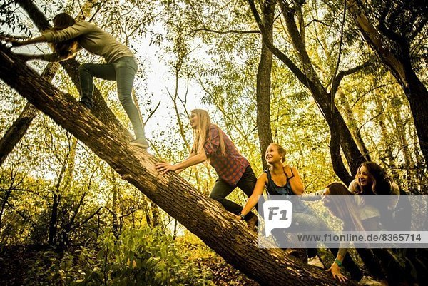 Fünf junge Frauen klettern auf einen Baum im Wald