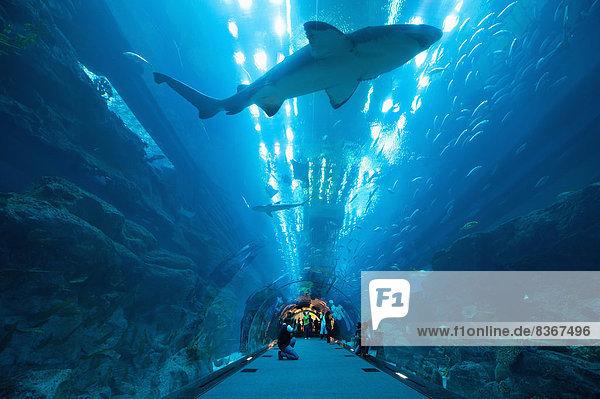 Vereinigte Arabische Emirate VAE Mensch Menschen Tunnel über Schwimmer Hai schwimmen
