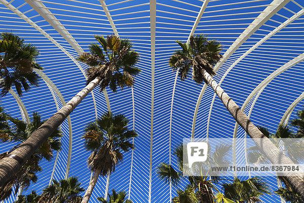 Baum  Wissenschaft  Großstadt  Kunst  Ansicht  Spanien